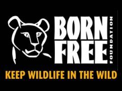 born-free-240x180