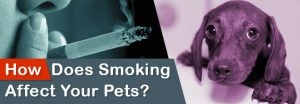 How-Does-Smoking-Affect-Your-Pets__